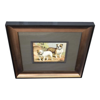 Framed Print of Bulldogs For Sale