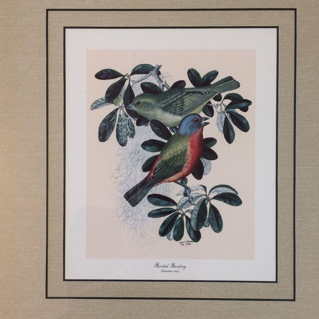 Vintage Earl O Henry Bird Prints - 4 Framed Prints For Sale - Image 9 of 13