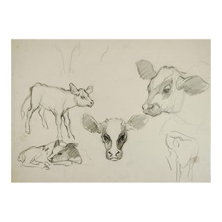 Pencil Study of Calves For Sale