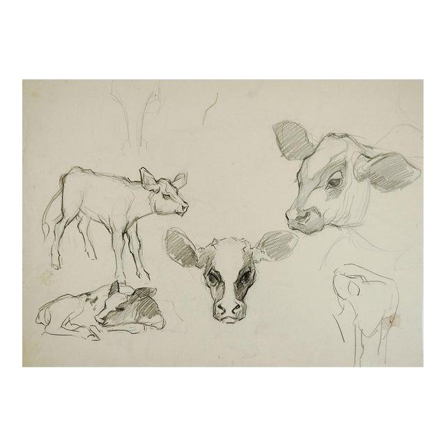 Pencil Study of Calves For Sale