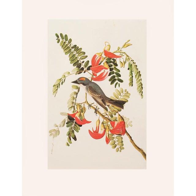 Green 1966 Gray Kingbird by John James Audubon For Sale - Image 8 of 10