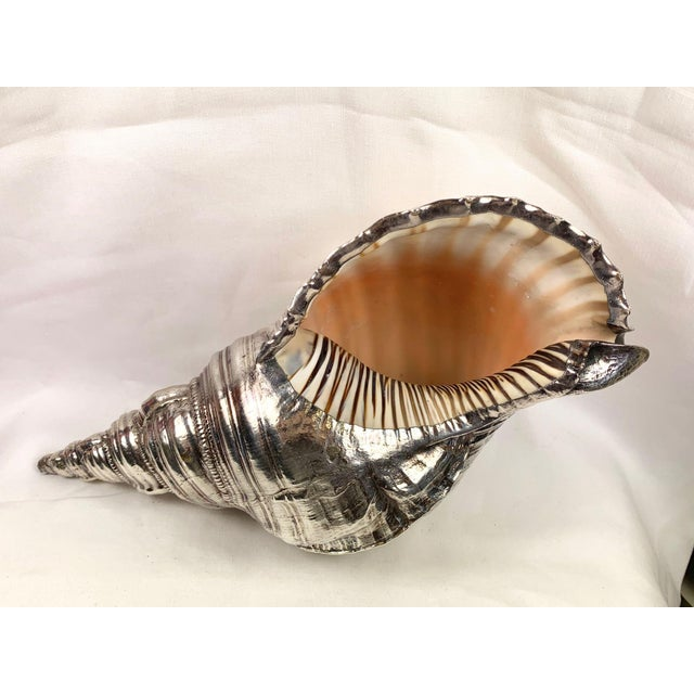An unforgettable gift from the sea—large, natural conch shell covered in sterling silver so it will compliment any room--...