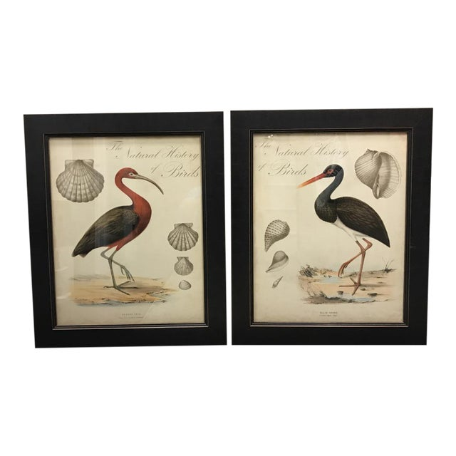 Shell and Stork Beach Prints - A Pair - Image 1 of 11