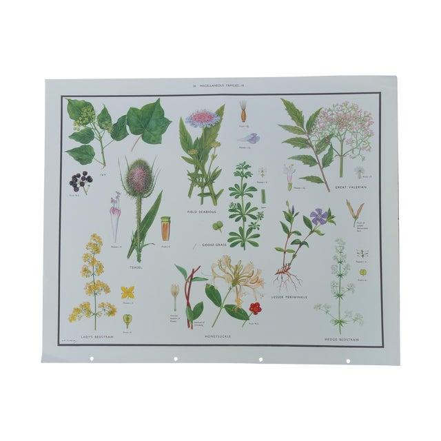 Vintage Botanical Poster - Image 1 of 4