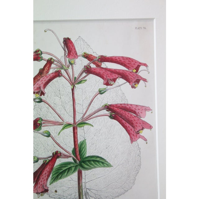 Mid 20th Century 20th Century Realist Pink Botanical Print For Sale - Image 5 of 7
