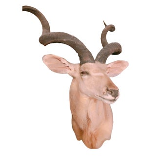 Vintage Taxidermy Greater Kudu For Sale