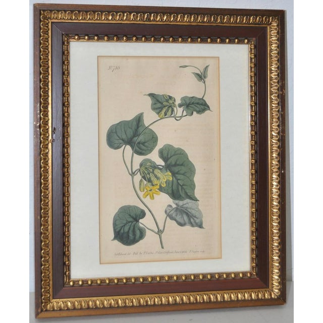 Wonderful hand colored engraving from Curtis Botanical Magazine c.1804. At 200+ years old, this antique engraving still...