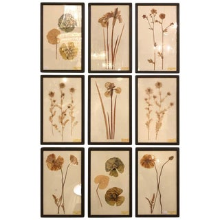 Nine Finely Framed Dried Flowers Each Under Glass Framed For Sale