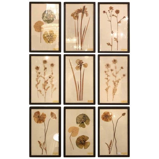 Nine Finely Framed Dried Flowers Each Under Glass Framed For Sale