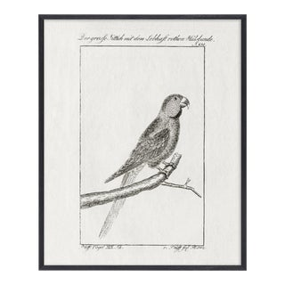 Black and White Bird Etching Print For Sale