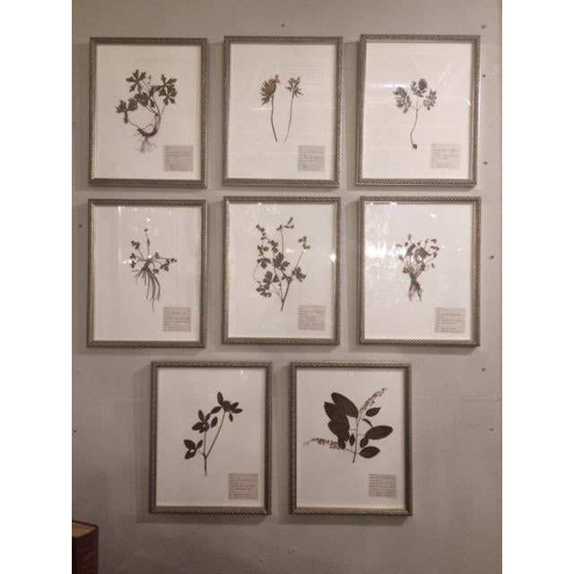 Early 20th Century Antique Herbarium Framed Plants - Set of 8 For Sale - Image 5 of 9