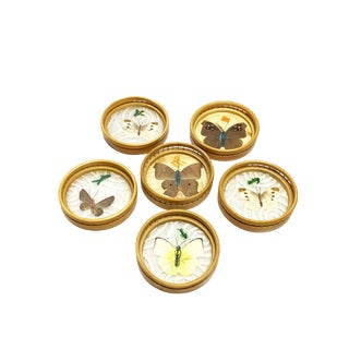 Vintage Wicker Coasters With Real Butterflies- Set of 6 For Sale
