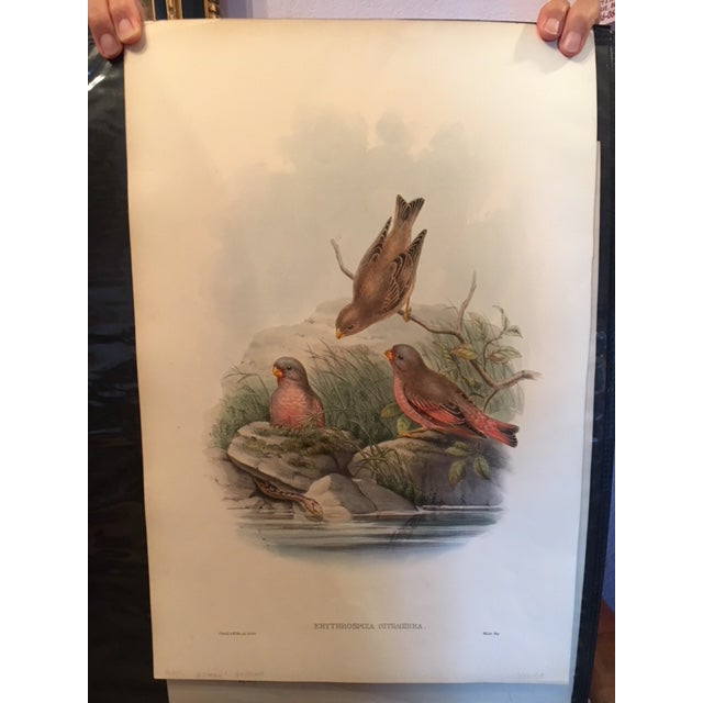 John Gould & William Hart Bird Illustration in the Age of Darwin For Sale - Image 11 of 11