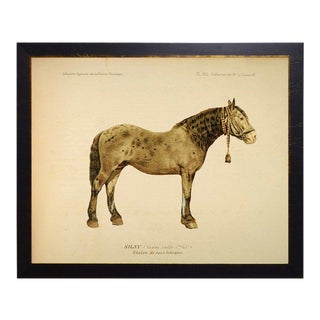 Country Print of Wainwright the Horse Bookplate - 26x20 For Sale
