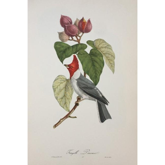 1st Edition Full Color Lithographs of Tropical American Birds - Set of 30 For Sale - Image 11 of 13