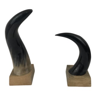 Polished Natural Steer Horns Mounted on Wood Bases - a Pair For Sale