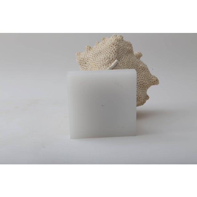 Plastic White Specimen Conch Shell Form Coral Mounted on Solid White Lucite Base For Sale - Image 7 of 8