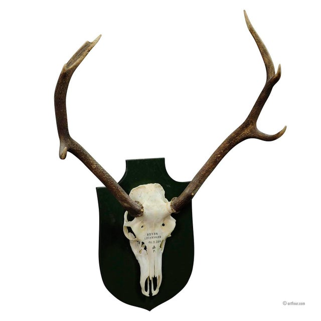 Small Black Forest Deer Trophy From A Noble Black Forest Estate For Sale - Image 4 of 4