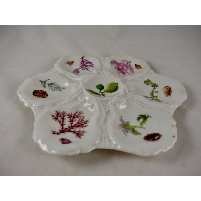 Green Haviland Limoges Porcelain Hand Painted Sea Fan & Shells Oyster Plate For Sale - Image 8 of 13