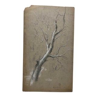 Eliot Clark Study of a Tree Drawing For Sale