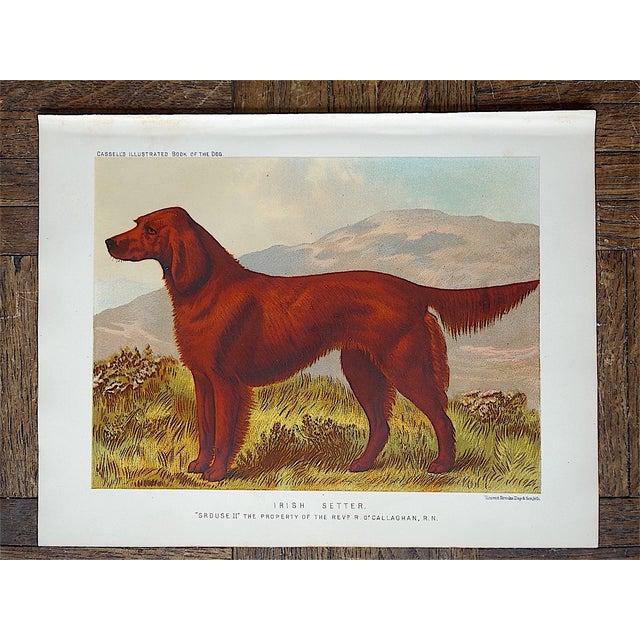 Antique Dog Lithograph - Irish Setter - Image 3 of 3
