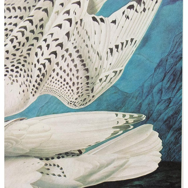 """1966 Cottage """"Gyrfalcon"""" Vintage Print by Audubon For Sale In Dallas - Image 6 of 11"""