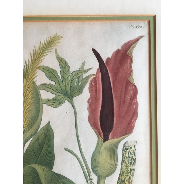 Lovely Vintage Hand Colored Botanical Print. Super pretty color and image. Matte shows age appropriate wear. Ready to...
