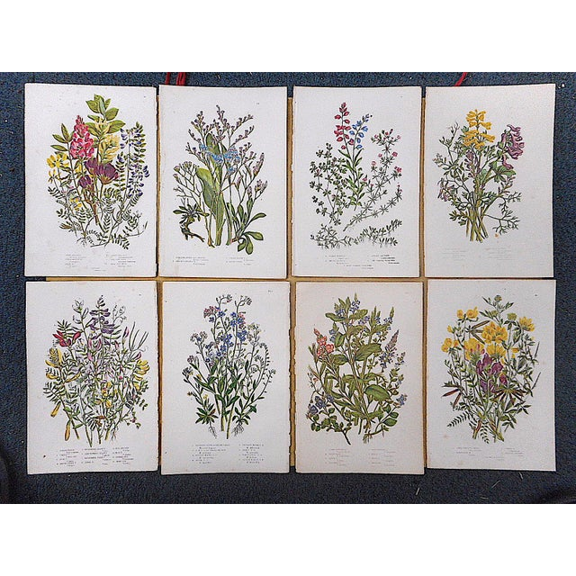These eight (8) 19th century botanical chromolithographs (each color laid in with a separate lithographic stone) by Anne...