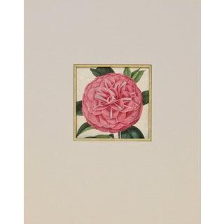 Verschaffelt 1854 Humboldt Camellia Print