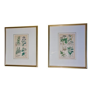 Antique English Botanical Prints - a Pair