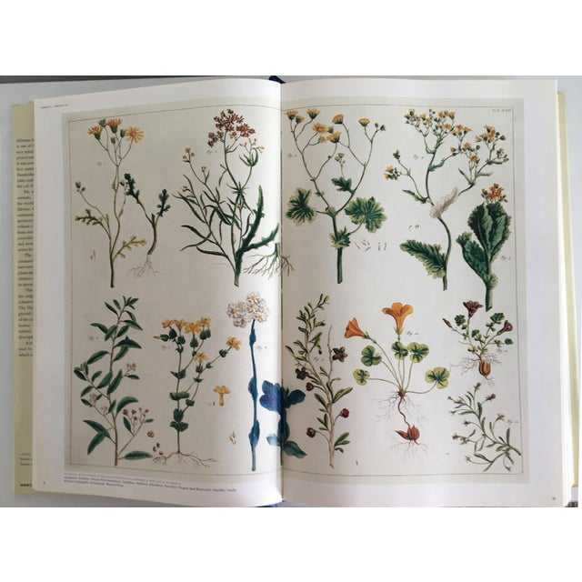 Moving Sale - Cabinet of Curiosities Book by Albertus Seba - Image 9 of 11