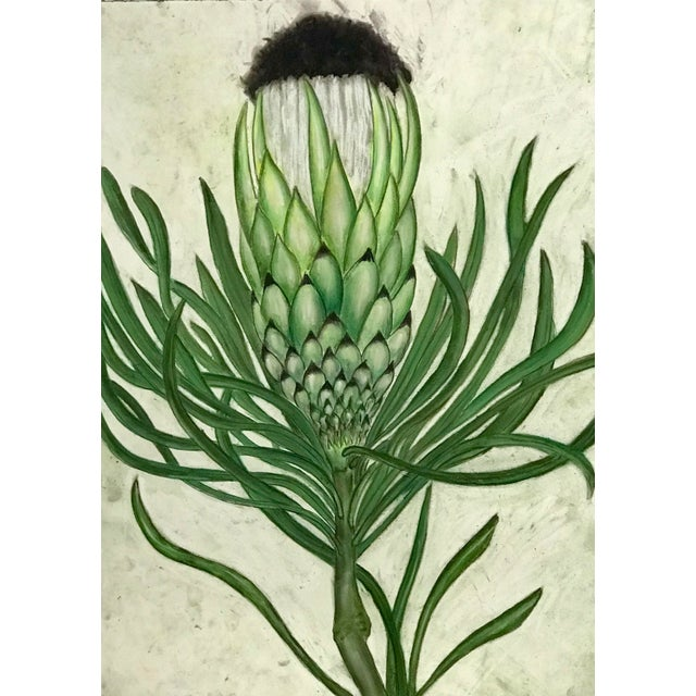 pastel drawing of protea