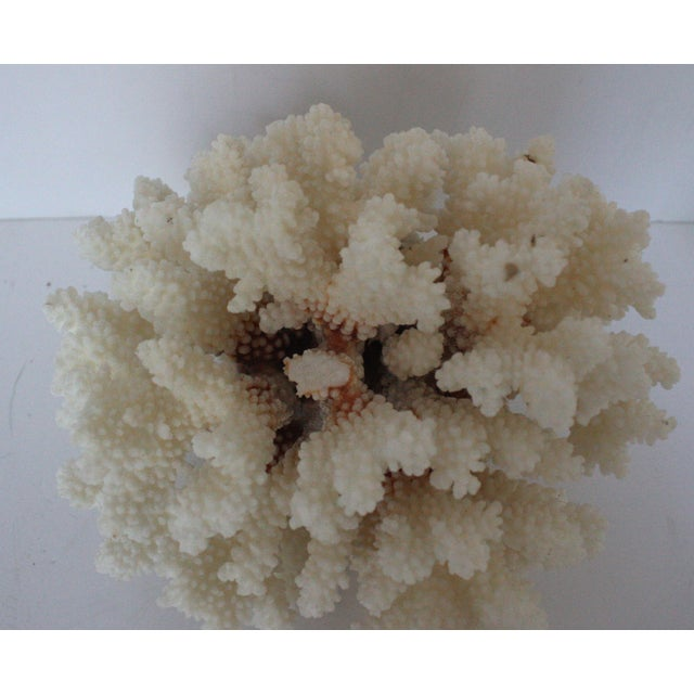 Natural Coral Specimen - Image 3 of 3