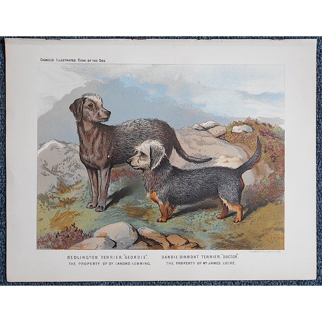 Antique Dog Lithograph - Terriers - Image 2 of 3