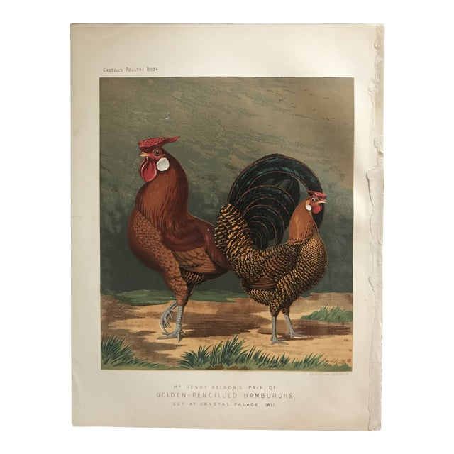 1890 Country Hamburghs Chickens Chromolithograph From Cassell's Poultry Book For Sale