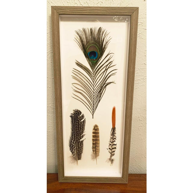 2010s Four Feathers Framed Under Glass by Kalalou For Sale - Image 5 of 6