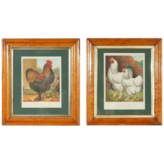 Antique Prints of Prize Winning Chickens - a Pair For Sale