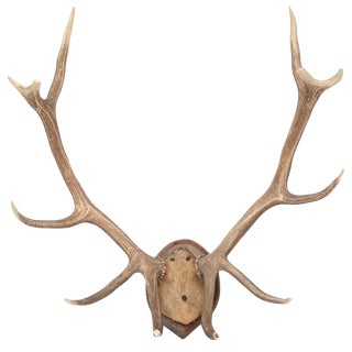 Mid-Century Modern White Tail Deer Buck Antlers Horns on Wall-Mounted Plaque For Sale