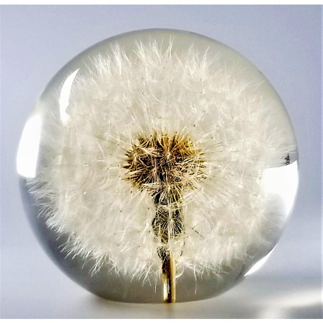 1960s Vintage Lucite Sculpture Paperweight of a Dry Dandelion For Sale - Image 5 of 12
