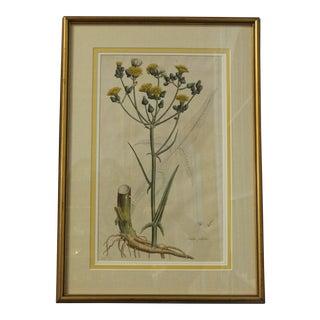 Framed Botanical Print by Curtis For Sale