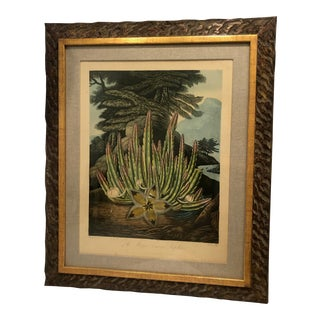 19th Century Boho Chic Succulent Botanic Print For Sale