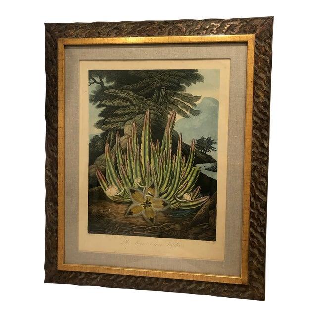 19th Century Boho Chic Succulent Botanic Print For Sale