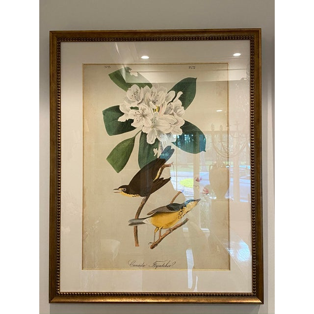 A pair of expertly matted and framed bird and floral prints. The unique and vibrant colors are accentuated by an off white...