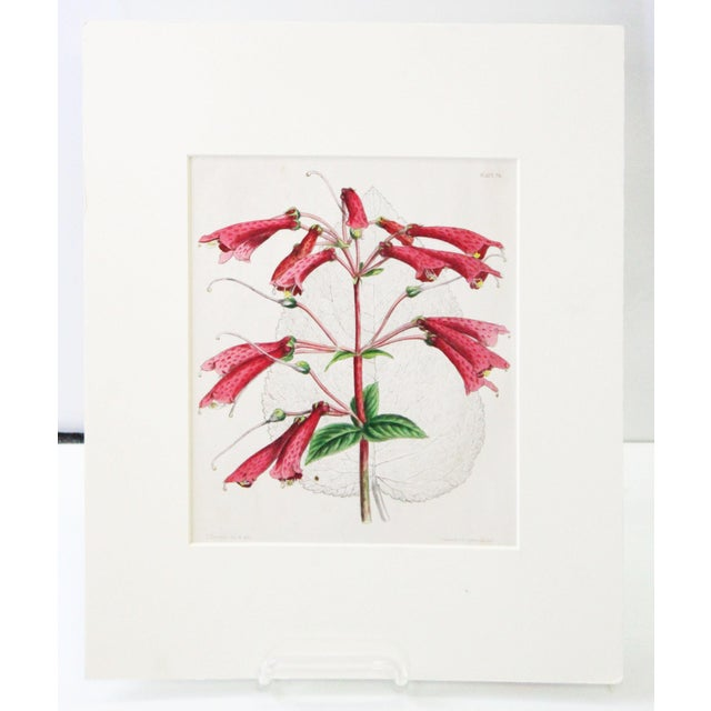 Printmaking Materials 20th Century Realist Pink Botanical Print For Sale - Image 7 of 7