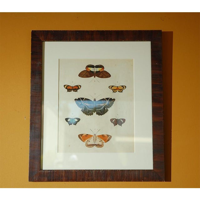 Brown Early 18th Century Antique Butterfly Prints - Set of 8 For Sale - Image 8 of 11