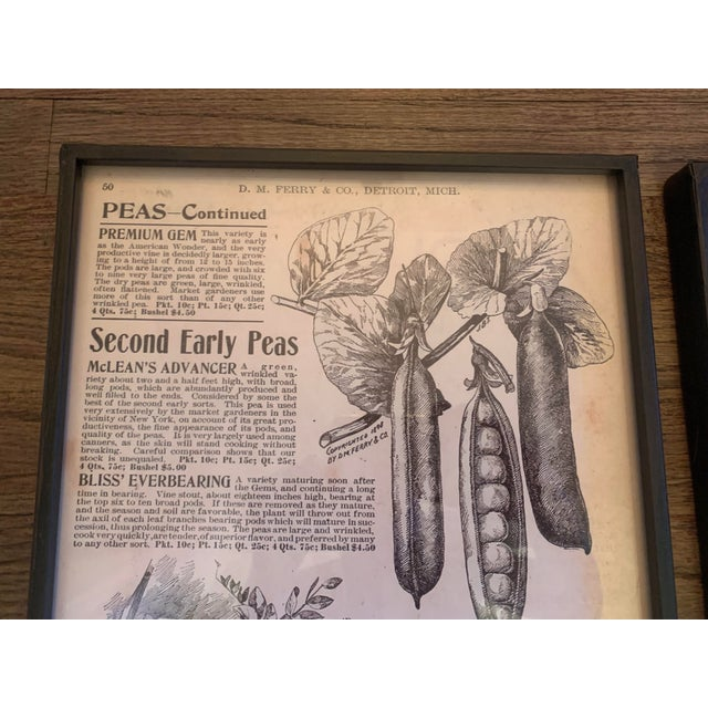 White Framed Vintage Seed Catalog Page Print Reproductions - Set of 3 For Sale - Image 8 of 13