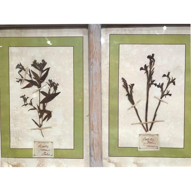 Pair of 21st Century Italian Dried Botanical Flowers in Painted Frames For Sale In Dallas - Image 6 of 11