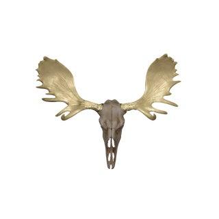 Wall Charmers Alberta Natural Rustic + Gold Antlers Resin Moose Head Skull