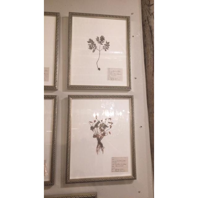 Antique specimens of plant materials from the early 20th century. Newly framed in wooden frames that have an antique gold...