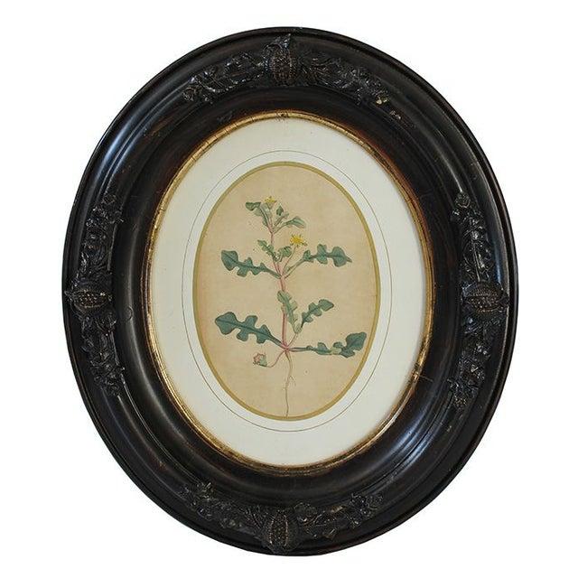 Civil War-Era Botanical Prints - Set of 4 - Image 3 of 7